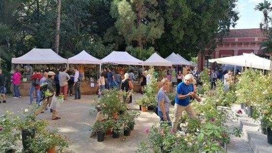 All'Orto botanico Zagara d'autunno, Bignone in trio al Santa Cecilia. Gli appuntamenti di domenica 27 ottobre