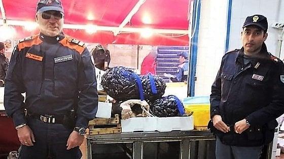 Palermo, blitz a Ballarò: 860 chili di pesce sequestrato, scoperta pescheria abusiva