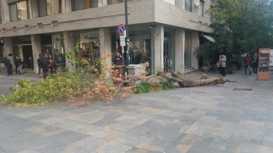 Palermo, alberi caduti e cornicioni pericolanti per il vento