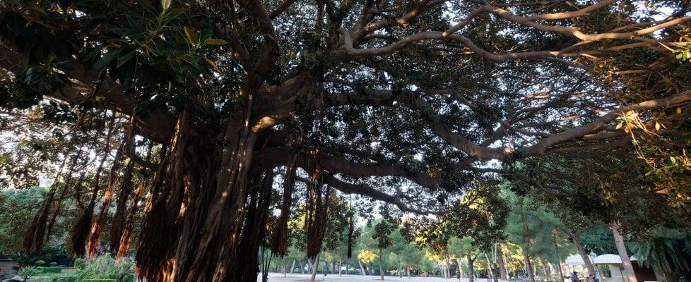 """La campagna. Palermo: verde, eventi culturali e decoro. """"Il Giardino Inglese si salva così"""""""