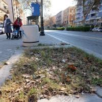 """Palermo, 12 platani abbattuti in via Libertà: """"Erano pericolosi"""""""