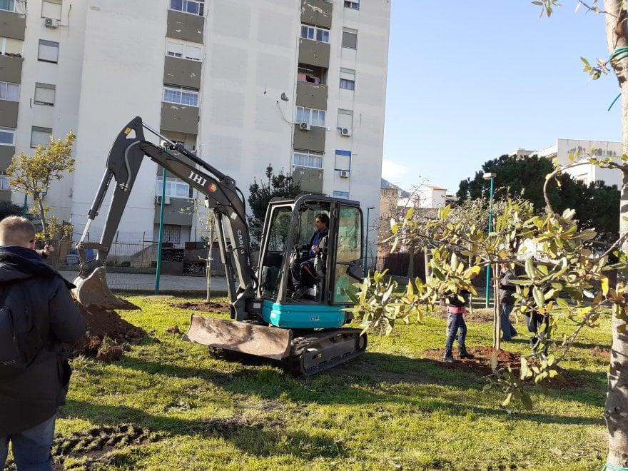 Palermo: il deputato 5Stelle Penna regala gli alberi, nasce un bosco allo Sperone