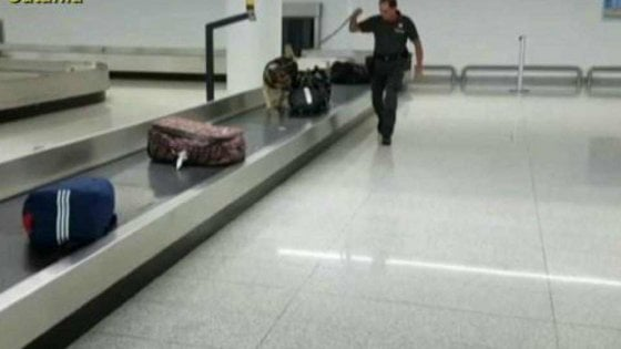 Palermo, il cane Haira fiuta le banconote, fermati in aeroporto con 7mila euro