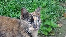 """I 200 mici del Gattile: """"State a casa ma aiutateci donando""""  foto"""