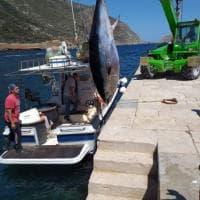 Marettimo, pesca fruttuosa: un tonno di 300 chili per due fratelli