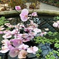 Palermo, dal 2 giugno riapre l'Orto botanico: 200 persone alla volta