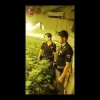 Palermo, serra di marijuana nel seminterrato e spaccio