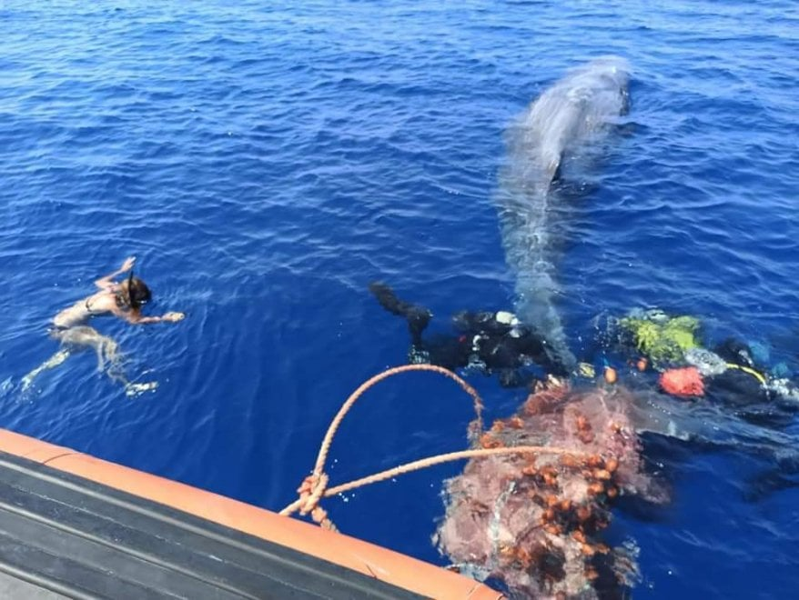 Lipari, capodoglio impigliato in rete illegale salvato da volontari e guardia costiera - Le foto