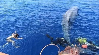 Lipari, capodoglio impigliato in rete illegale salvato da volontari e guardia costiera