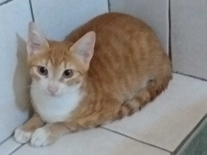 """Lampedusa. """"Pupi"""", il gatto-migrante, ha trovato casa sull'isola ma adesso anche per lui scatta la """"quarantena"""""""