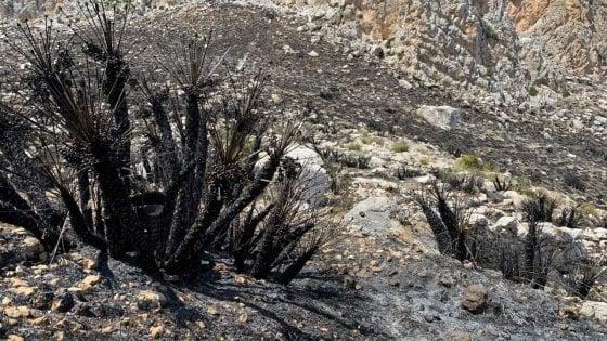 """Sicilia, i monti bruciati adesso fanno paura: """"La natura ferita è a rischio dissesto"""""""