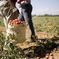 L'agricoltura per i giovani, un bando per affidare terreni