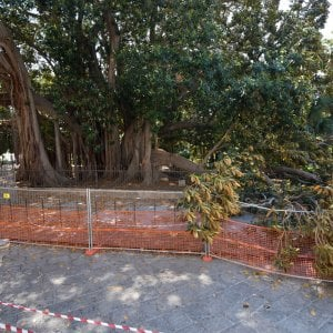 Dal Politeama a Villa Giulia la mappa degli alberi pericolosi