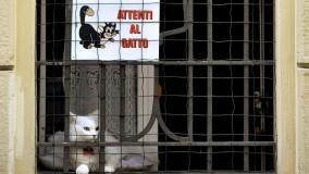 La curiosità: Attenti al gatto