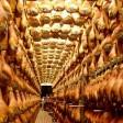 L'ultima battaglia a tavola:  il prosciutto senza maiale   Coldiretti: stalle chiudono