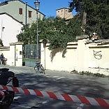 Vento, Comune chiude i parchi    Crolla albero all'asilo - Foto       A San Lazzaro   /   In via Zarotto