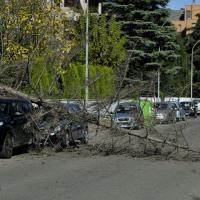 Vento fa crollare albero su due auto