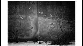 In mostra le foto di Stefano Cavazzini