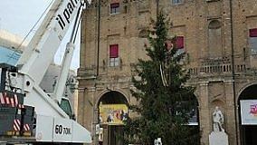 E' arrivato l'Albero in Piazza    Capodanno, polemica sui costi
