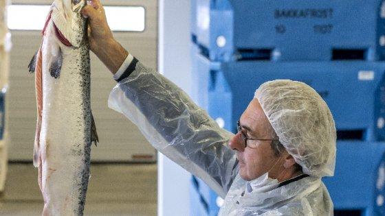 Il parmigiano Cerati, l'uomo che sussurra ai salmoni (e vende l'Upstream)