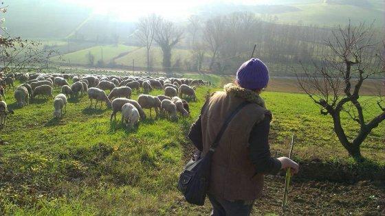 La resistenza delle donne pastore: viaggio nell'Italia che non vuole scomparire