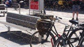 Invasione di  api in piazza Garibaldi