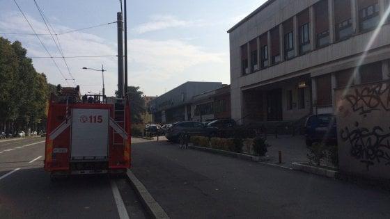 Xylella fastidiosa avanza senza pietà: primo caso a Ostuni