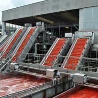 Tomato Day a Parma: Italia supera Cina, è secondo produttore mondiale di