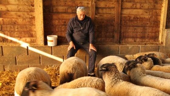 """Allarme lupo in Val Taro: """"Troppe reazioni di pancia, poche di testa"""""""