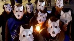Presidio in piazza a difesa del lupo