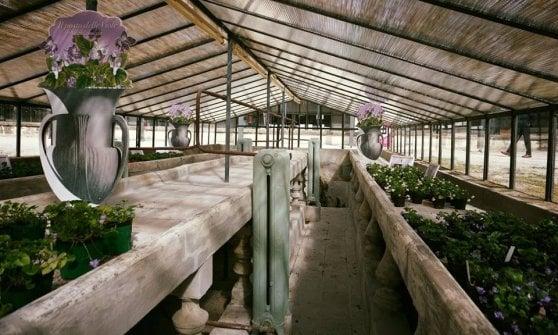 Violetta di Parma, torna a vivere la storica serra del Giardino