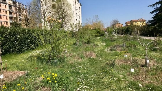 Parma, la foresta urbana dove fioriscono piante e relazioni