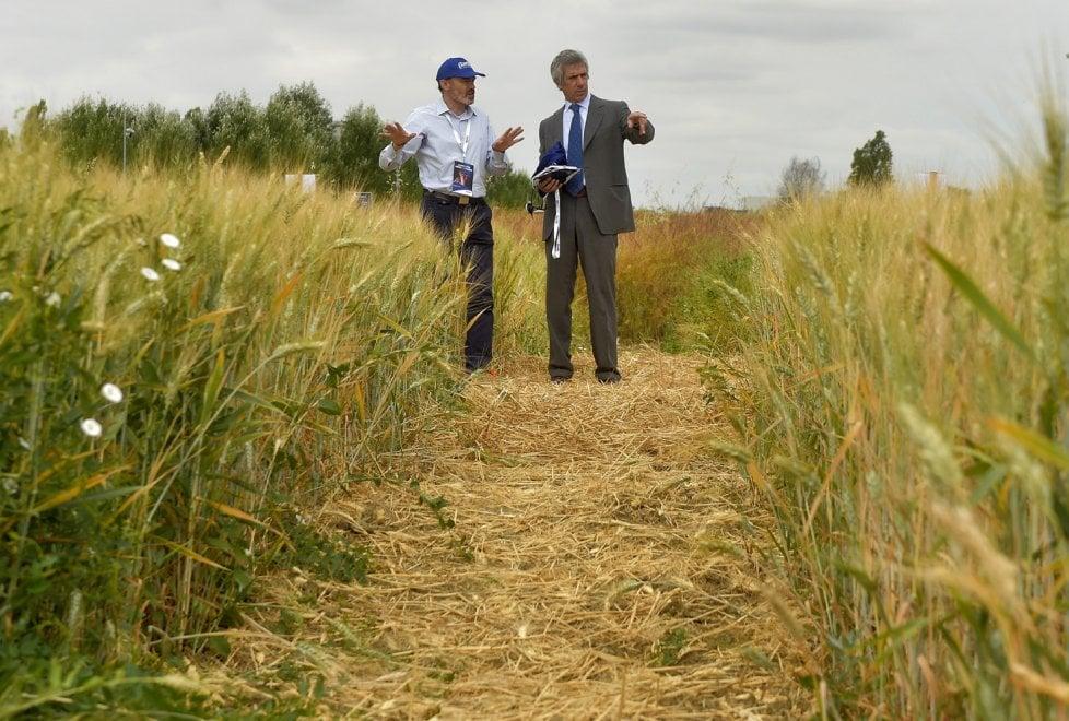 Barilla compie 140 anni il compleanno nel campo di for Da dove proviene il grano della barilla