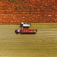 Mutti, parte la raccolta del pomodoro: coinvolti 480 produttori