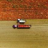 Mutti, parte raccolta pomodoro: coinvolti  480 produttori