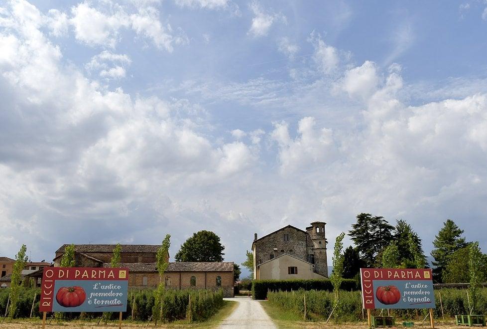 Parma, il ritorno del pomodoro Riccio nel podere culla della conserva