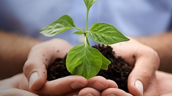 Cibo e ambiente: Barilla lancia concorso per salvare il pianeta