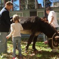 Pet Therapy nei giardini dell'ospedale Maggiore di Parma