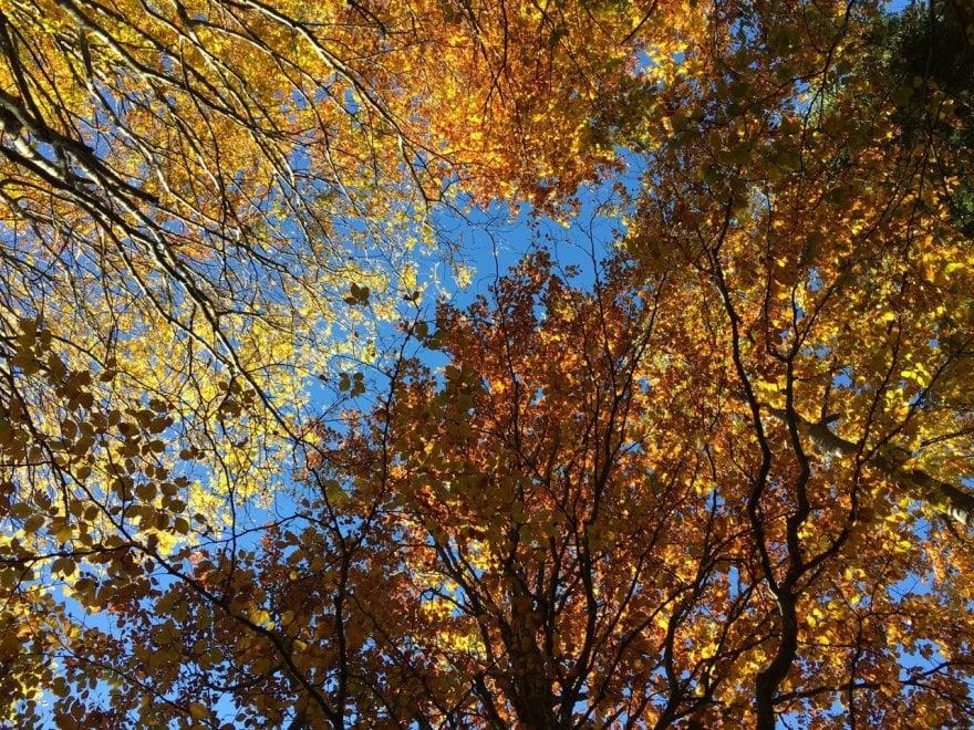 Parma, colori d'autunno in appennino - Foto