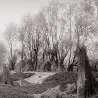 Boschi fatati e scolpiti: dal grande fiume all'appennino  - Foto