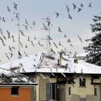 Neve e pioggia gelata a Parma e in provincia