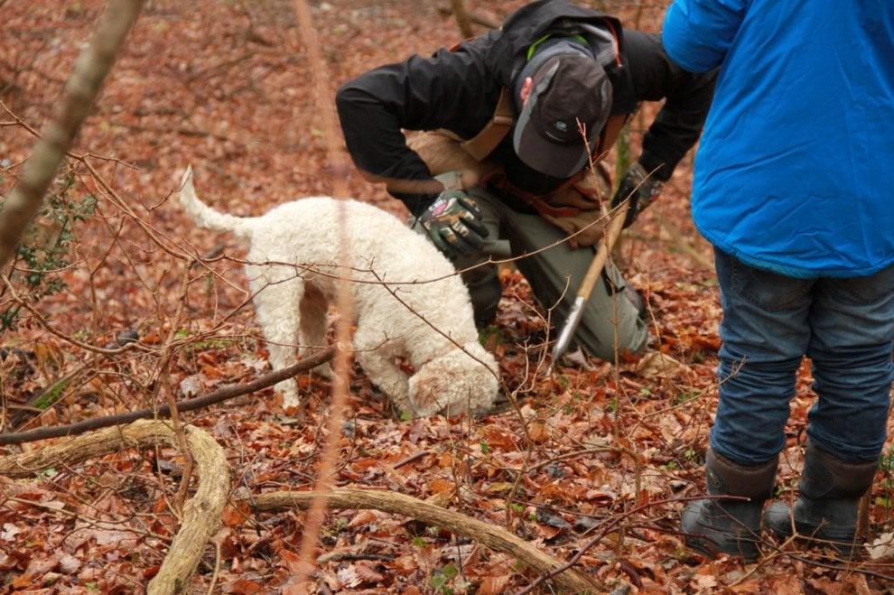 A caccia di tartufi sull'Appennino Parmense - Foto