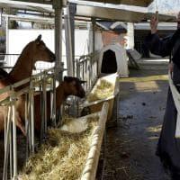 Parma, a Veterinaria la benedizione degli animali - Foto