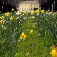 Primavera, Parma è in fiore - Foto