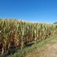 Clima, le previsioni in Emilia: estati sempre più secche e nubifragi in