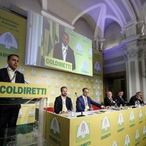 """Governo blocca il Ceta. Coldiretti: """"Danneggia export Parmigiano"""""""
