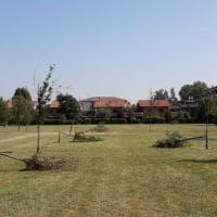 Parma, alberi abbattuti nel parco: ennesimo atto vandalico - Foto
