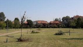 Alberi abbattuti nel parco: ennesimo atto vandalico - Foto