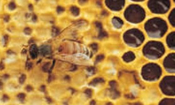 """Emilia - Romagna, Coldiretti: """"Le api son tornate a volare"""""""