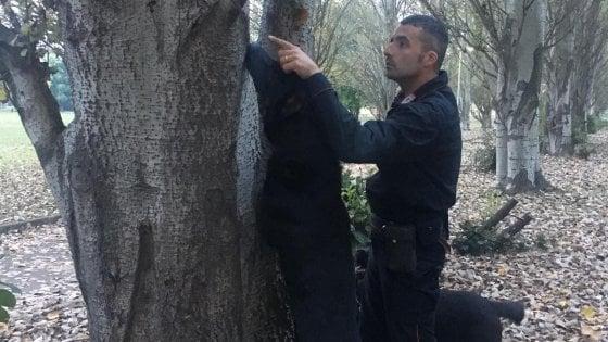 Parco Falcone Borsellino, droga nelle siepi scoperta dal cane dell'Arma